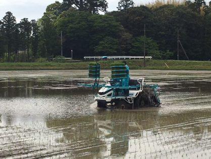 南相馬市小高区営農(稲作)再開支援事業、「田植え」開始