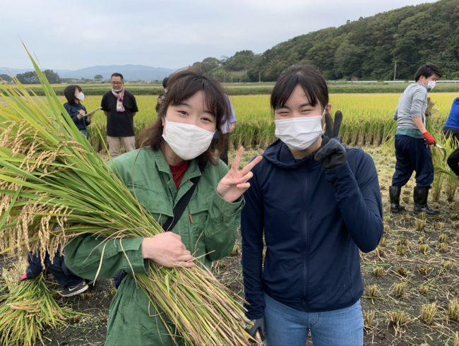 浪江町・東京農業大学との連携事業による浪江町での稲刈り実習等実施